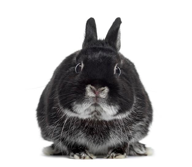 Snoei konijn onder ogen zien geïsoleerd op wit