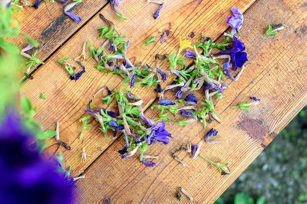 Snoeien van oude petunia of surfinia bloemen. een houten tafel met gedroogde bloemen.