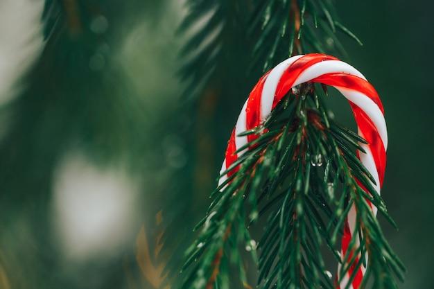 Snoep stokken op kerstboom