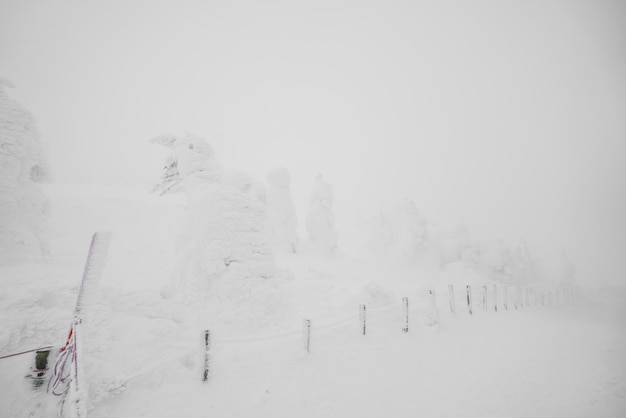 Snow monsters area mountain zao, japan