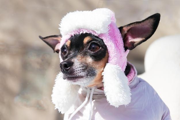 Snuit van een hond in een hoed in de winter