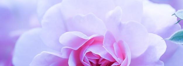 Soft focus abstracte bloemen achtergrond paarse roos bloem macro bloemen achtergrond voor vakantie merk