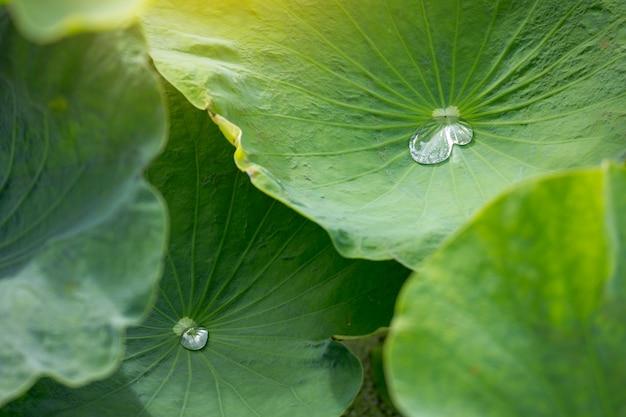 Soft focus close-up van geel groen rijst veld