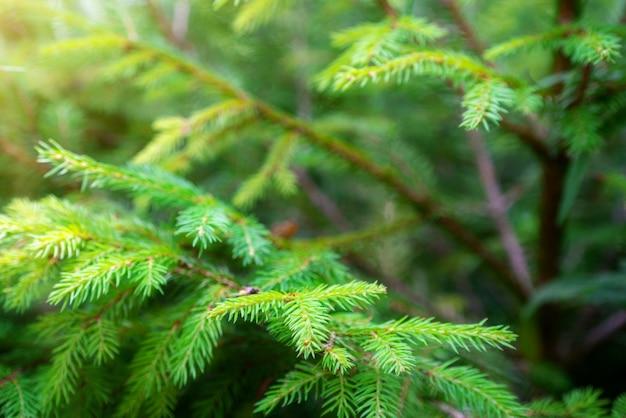 Soft focus image van groene natuur achtergrond.