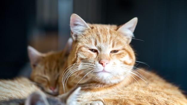 Soft focus van een bruine huiskat met zijn lichtjes open ogen