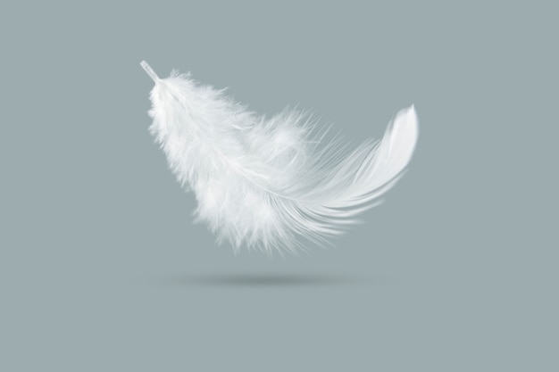 Solf witte veer die in de lucht valt.