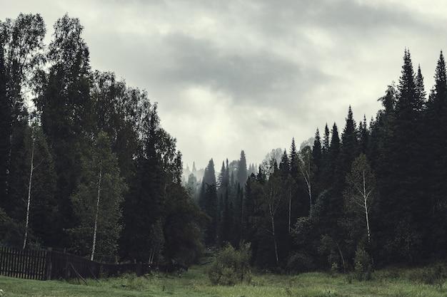 Sombere atmosfeer van avond in donker bos. hoge sparren en dennen in mist. bewolkt weer en spookachtige nevel in taiga. mist tussen lagen van bomen. griezelig landschap in horrorstijl in vervaagde tonen.