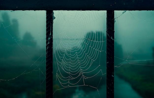 Sombere donkere nachtachtergrond met spinnenwebben in het bos