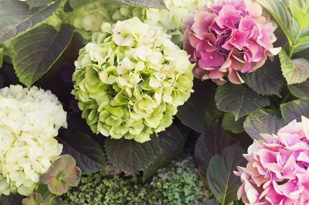 Sommige bloemen en bladeren van hortensia, zomerdag in de tuin, kopie ruimte