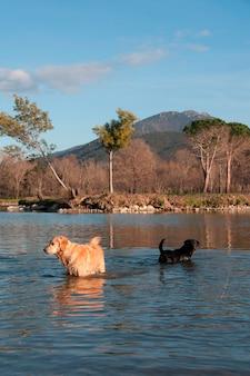 Sommige honden in het water