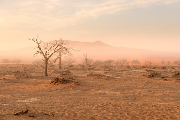Sossusvlei, namibië. acaciaboom en zandduinen in ochtendlicht, mist en mist.