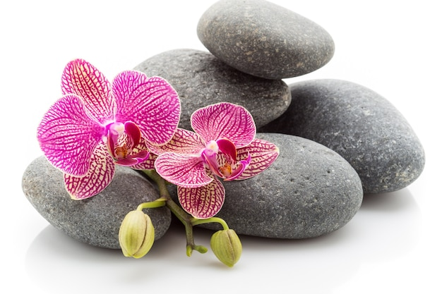 Spa masage stenen en orchidee geïsoleerd op de witte achtergrond.