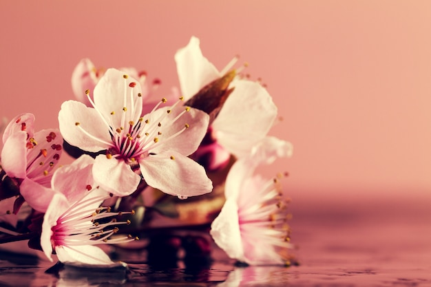 Spa natuurconcept. close-up van mooie pink paarse bloemen op water met plaats voor tekst.