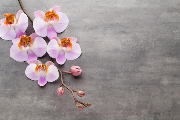 Spa orchidee thema-objecten op een grijze achtergrond.