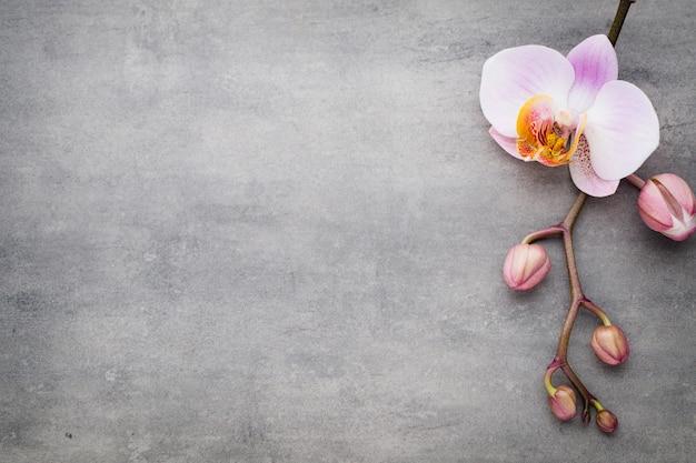 Spa orchidee thema-objecten op grijs