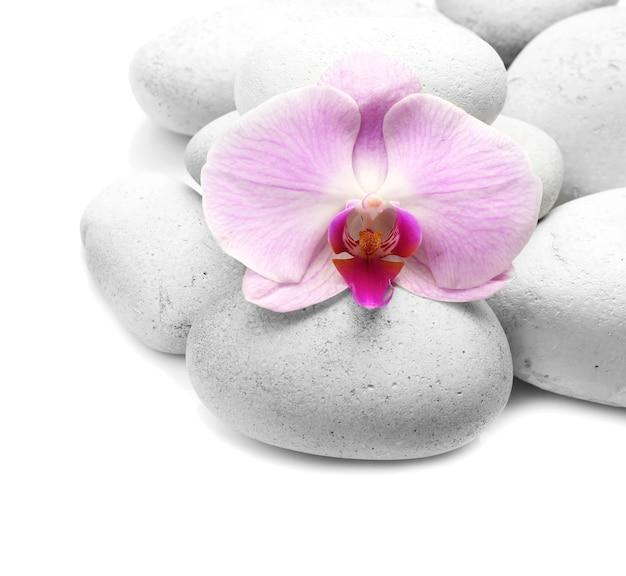 Spa stenen en orchidee op wit