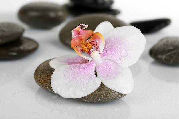 Spa stenen met orchidee op lichte ondergrond