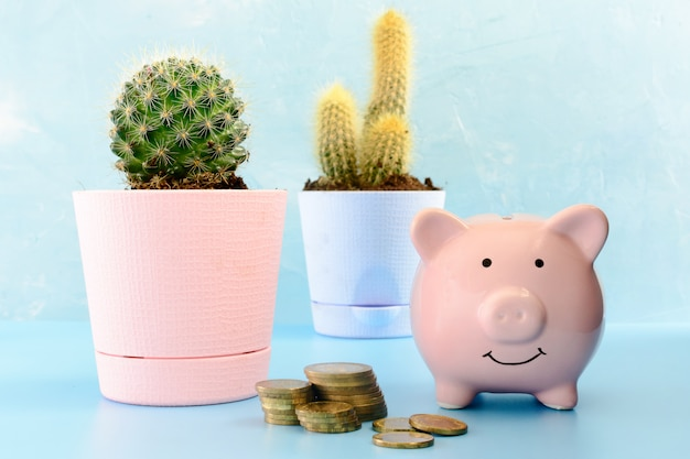Spaarvarken en cactus in een roze en blauwe pot