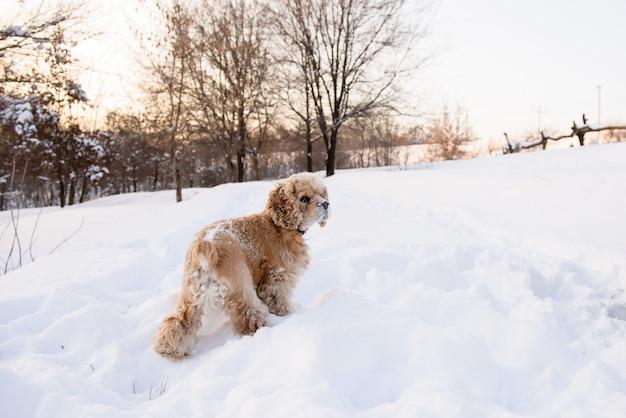 Spaniel staat in een sneeuwjacht.