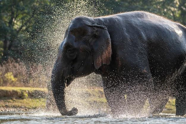 Spat water op de tijd van het olifantenbad.