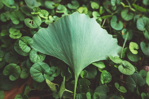 Speciaal is, onderscheidt een enkel blad zich van de rest van de planten, met gedempte tonen en toegevoegde filmkorrel.