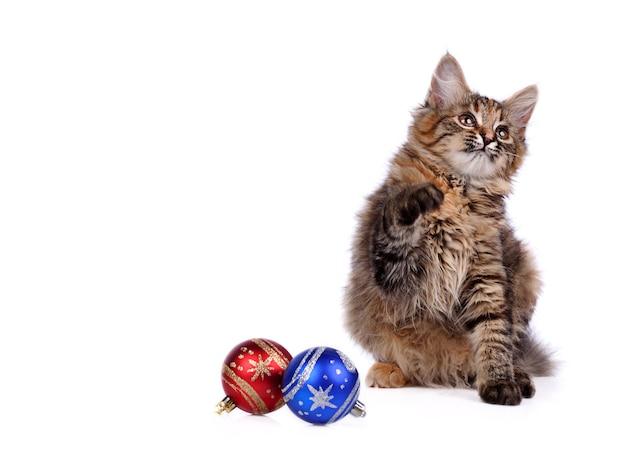 Speels katje met kerstversieringen