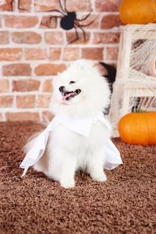 Speels puppy dat een witte cape draagt