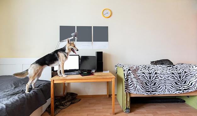 Speelse bastaardhond en geërgerde oude gestreepte kat die thuis op bed liggen en elkaar aankijken