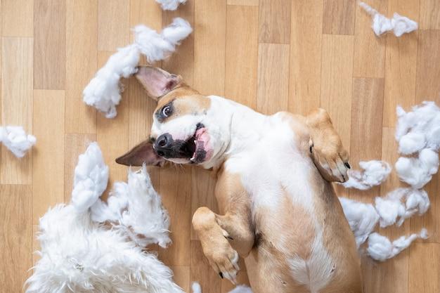 Speelse hond onder gescheurde stukjes van een kussen op de vloer, bovenaanzicht.