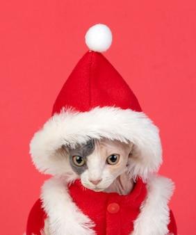 Sphinx kat met kerst kleren geïsoleerd op een witte achtergrond