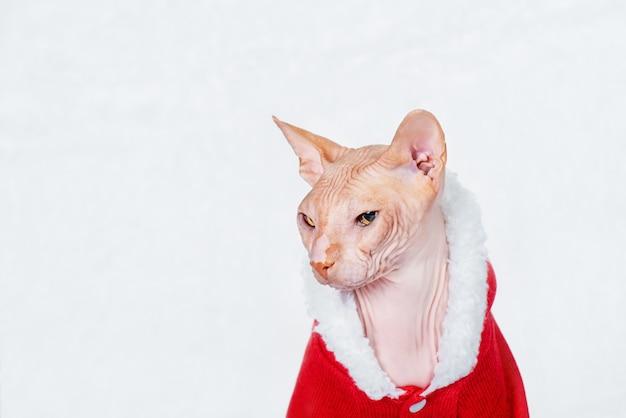 Sphynx-kat in een kerstmankostuum op de achtergrond van een witte pluizige plaid. kerstmis en nieuwjaar.