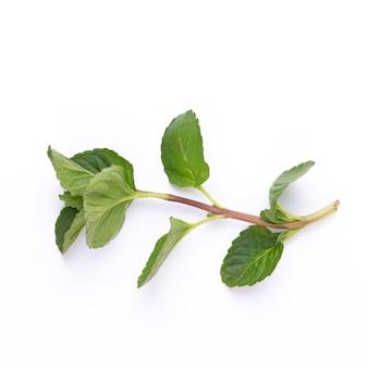 Spice plant geïsoleerd geïsoleerd