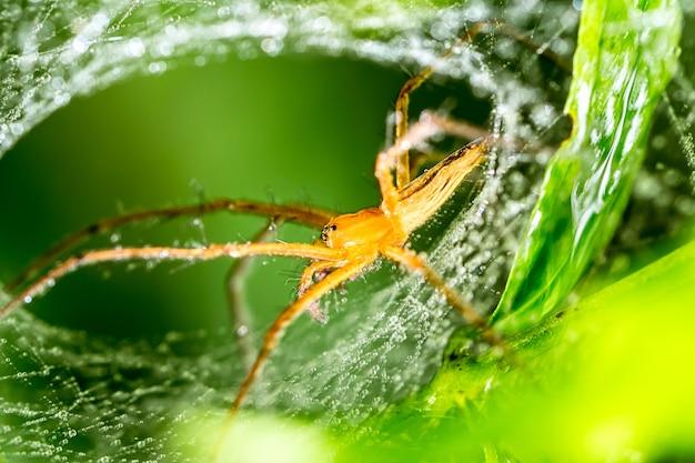 Spider en spinnenweb op groen blad in bos