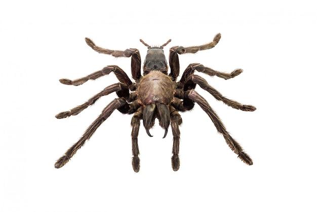 Spider geïsoleerd