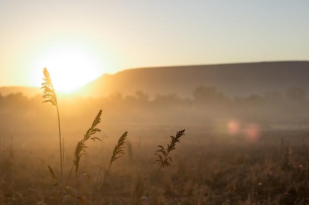 Spikes at dawn
