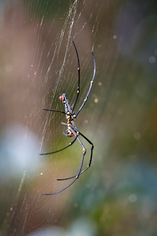 Spin in het nest met waterdruppeltjes