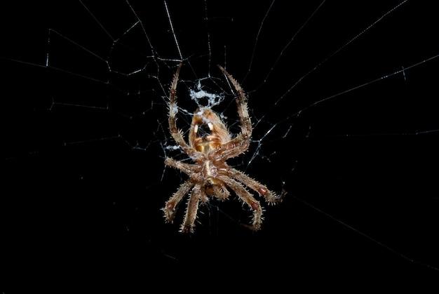 Spin in het web 's nachts
