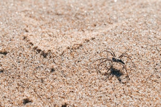 Spin in het zand van het strand