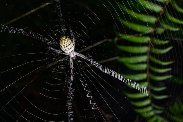 Spin macro op het web in de natuur