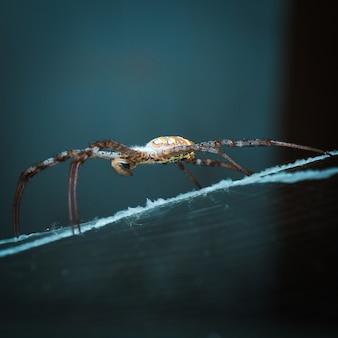 Spin op haar web dat op een vlieg wacht.