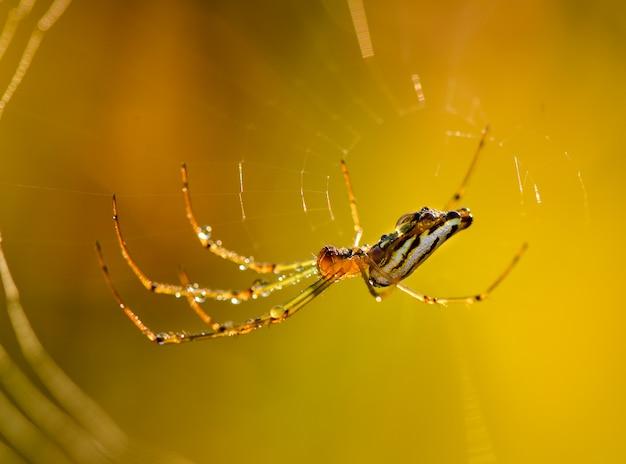Spin op het web