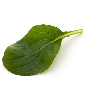 Spinazie blad close-up geïsoleerd op wit