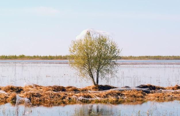 Spinnen en familie in spinnenwebben op een boom in de buurt van de vijver. siberië. rusland.