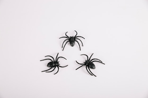 Spinnen liggen op een witte achtergrond