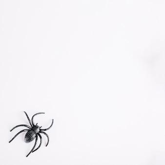 Spinnen spinnen liggend op een witte achtergrond