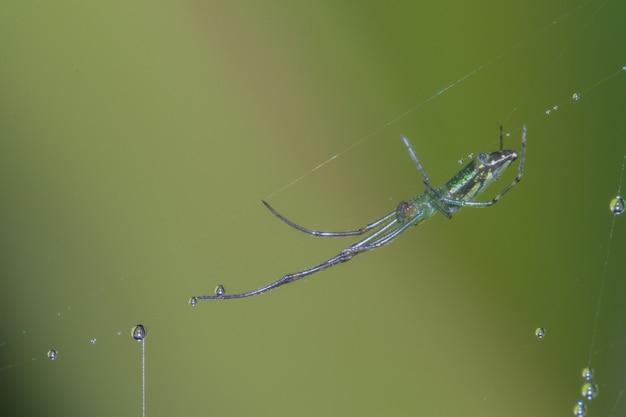 Spinnen, spinnenwebben en dauw close-up in de natuur.