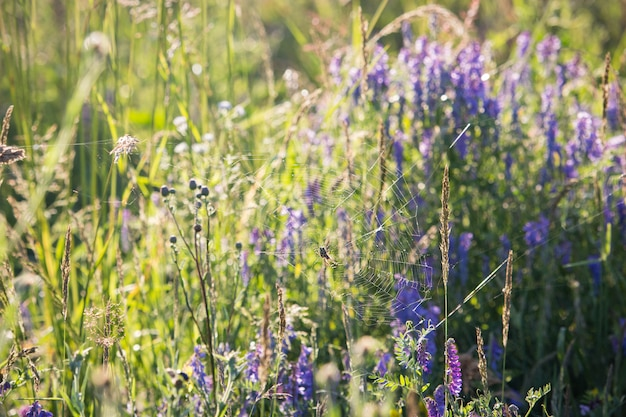 Spinnenweb in paarse wilde bloemen