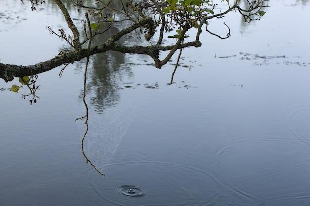 Spinnenweb met dauwdruppels in de vroege ochtend aan de boom