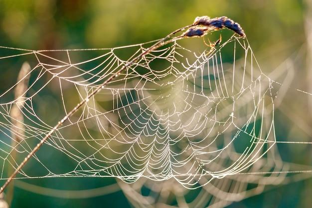 Spinnenweb met dauwdruppels op droge installatiestam in zonlicht
