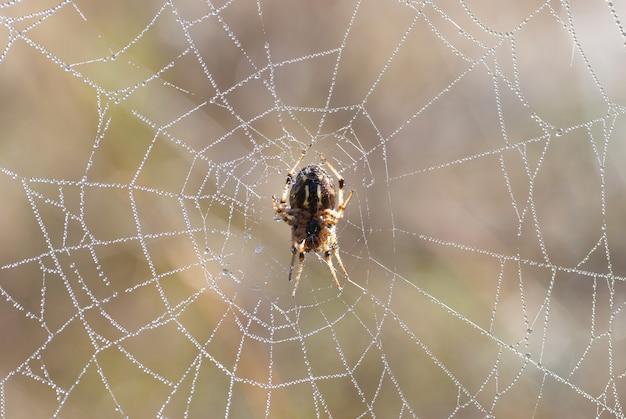 Spinnenweb met glanzende druppels water